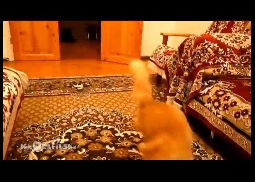 マリオのジャンプの音に異常に反応している猫