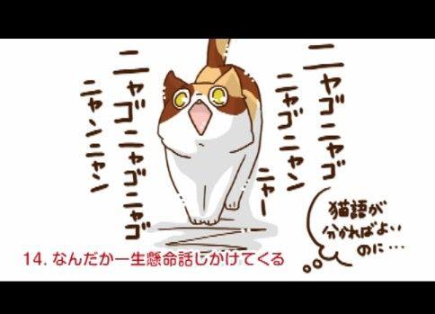 POM!企画|猫あるある20選を描いてみた|大内キリエ
