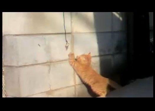 近所の野良?猫がかわいすぎた件