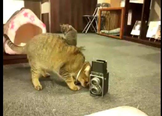 壊したカメラを、必死に直すネコ