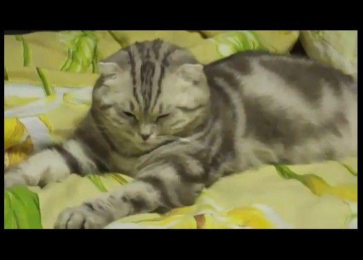 6秒後に負ける猫