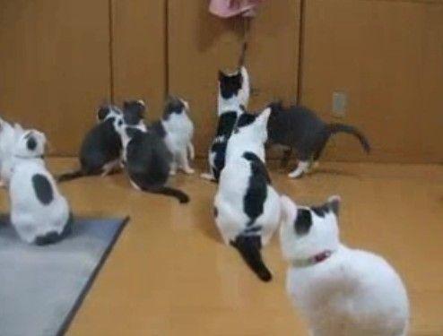暇をてあました猫達の遊び