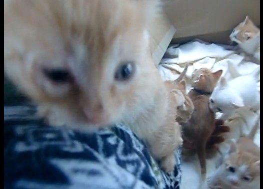生後1ヶ月の子猫達が腕を登ってきた