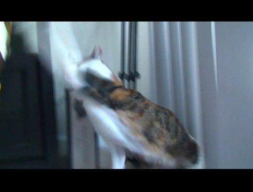 ビックリしてつい本気を出してしまう猫
