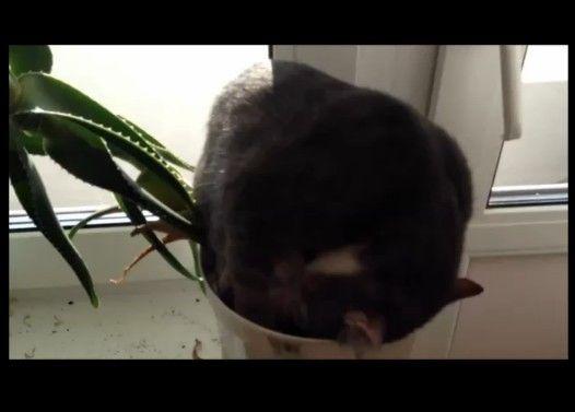 プランターの上で寝てる猫がかわいい