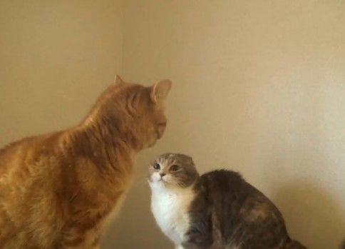 怒ってたのに滑って恥ずかしそうな猫