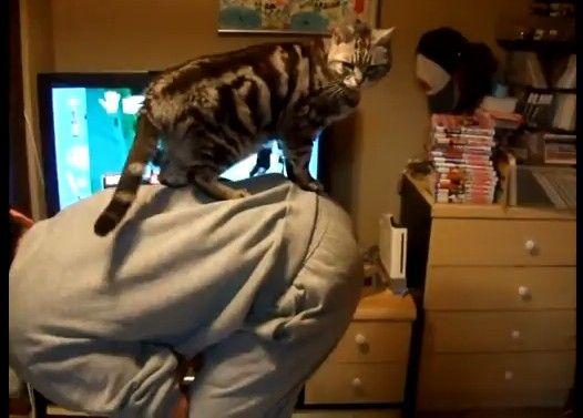 猫と腕立て伏せ