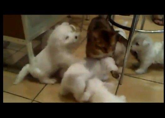 子犬たちが束になって1匹の猫を攻撃