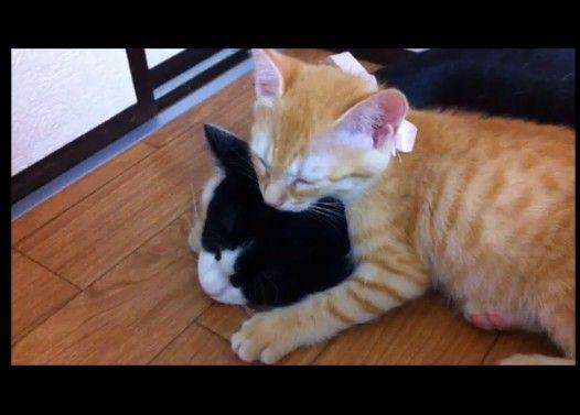 落ちそうで落ちない子猫
