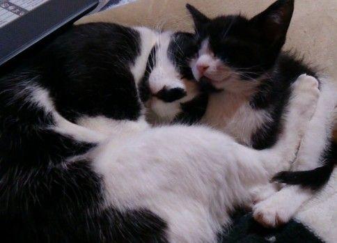 【子猫】顔を寄り添い合って寝る母と息子