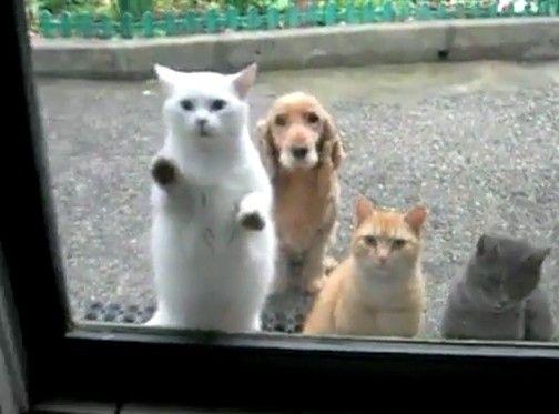 猫たちが騒いでいるけど何だかよくわからないまま後ろで待機している犬
