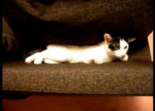 どうしてもソファーで寝たい猫