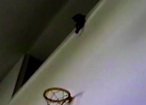 天才バスケ猫、現る。ゴールに見事なシュートを叩き込む猫が凄すぎる