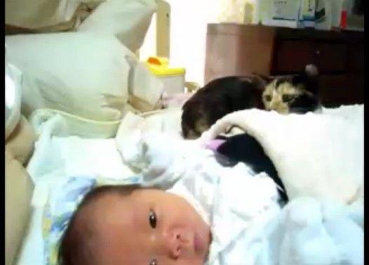 赤ちゃんと見守る子猫