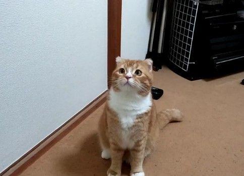 何かを見つけた猫