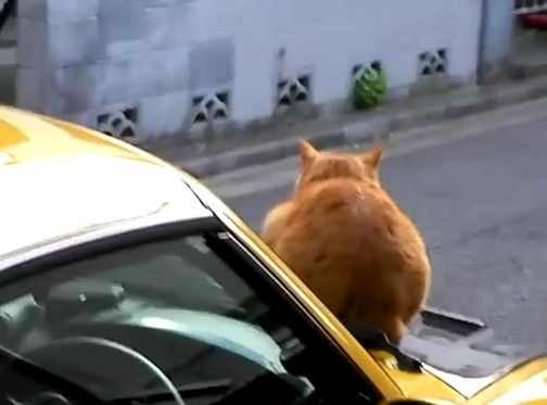 猫を一瞬で追い払う方法