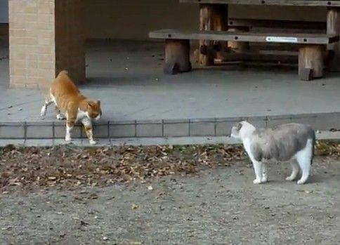 茶トラ白VSデブ猫の近距離猫喧嘩