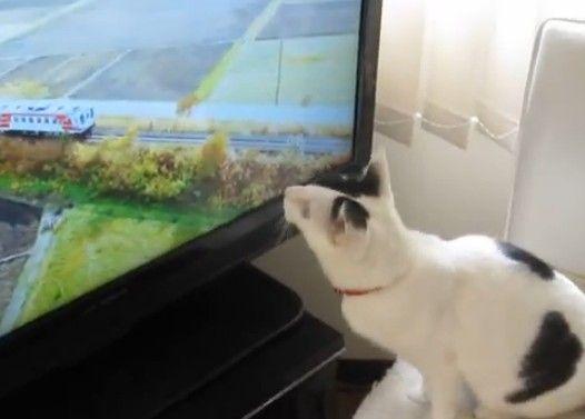 「たま」の毎日の日課、「あまちゃん」のテーマ曲と猫の「狩り」