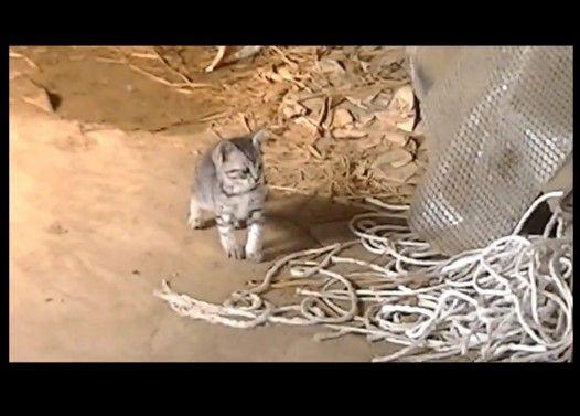 おっかなびっくりな子猫