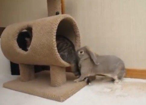 ねこのしっぽが気になるウサギ