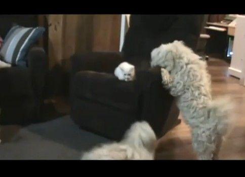 怯える子猫を助ける紳士な犬