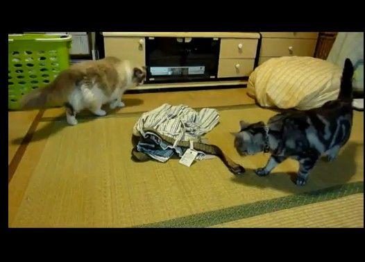 ベルト怖い〜猫