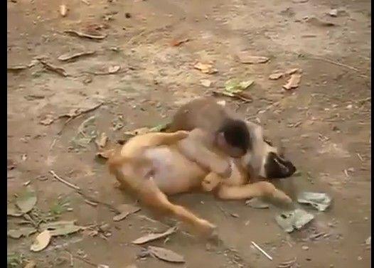 猿と犬の仲良しレスリング