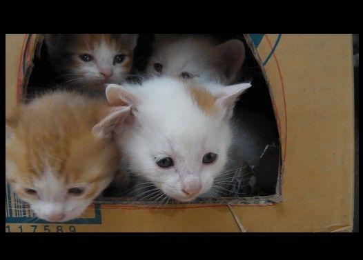 新子猫五匹その5 「子猫がないた!!」