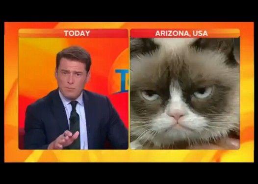 フテネコ VS キャスター Grumpy Cat VS Karl Stefanovic