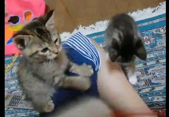 回転猫パンチ