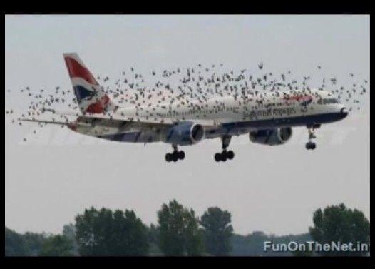 鳥と飛行機が接触するとこうなる