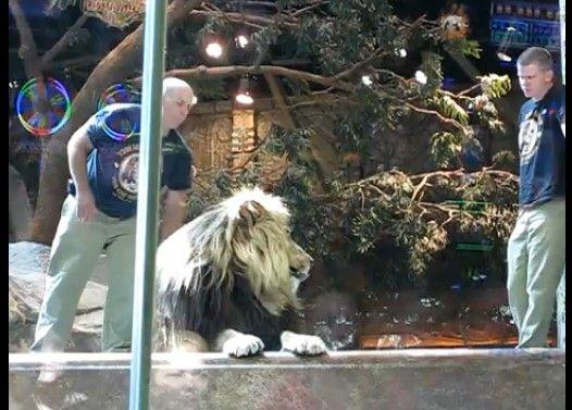 若い飼育員の生意気な態度にライオンさん(夫)が切れる