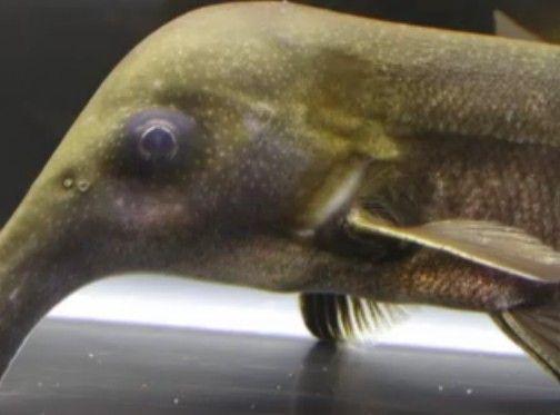 ユニークな魚たち