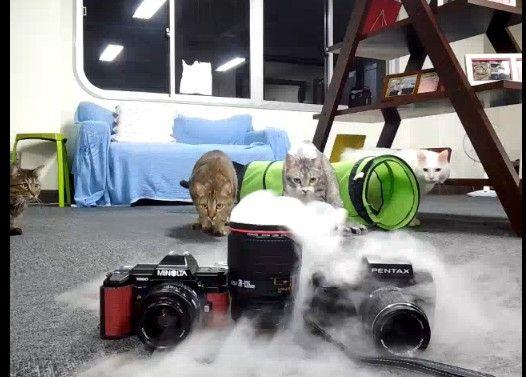 突然の『ドライアイス投入』に腰を抜かす猫たち