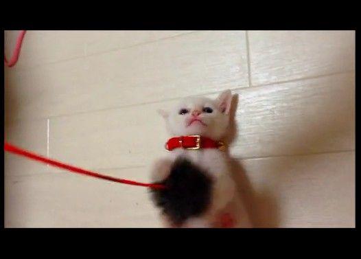 おもちゃにしか見えない猫