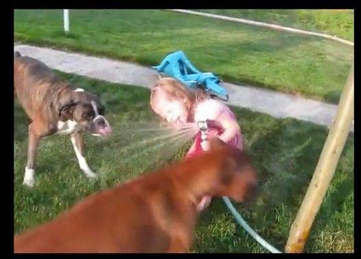 犬といっしょに水を飲もうとする女の子が可愛い