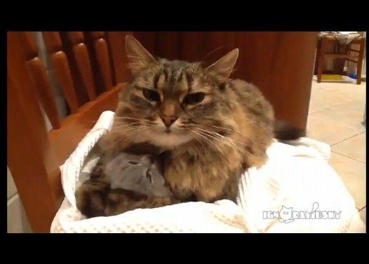 母猫の腕に包まれて顔だけ出している子猫