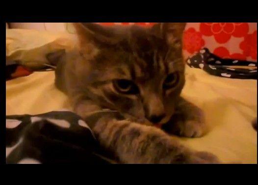 エア吸引する子猫大百科