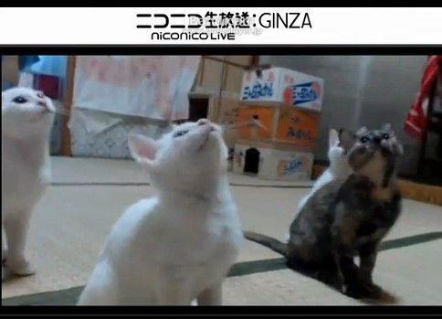 シンクロニャイズド ダンシング!