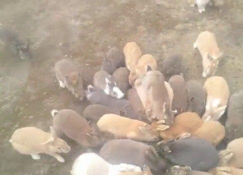 ウサギの群れに襲われました