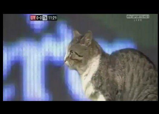 サッカーの試合に乱入したネコさん