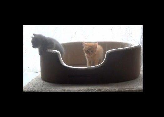 子猫たちの決闘