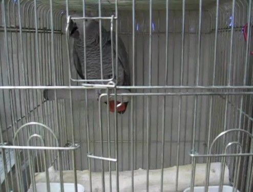 緊急地震速報のアラームを覚えちゃった鳥