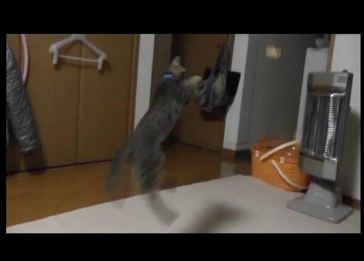 けしからん子猫に芸を仕込んでみた
