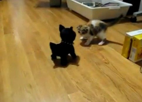 じりじりと迫りくるおもちゃの犬(?)にビビる子猫
