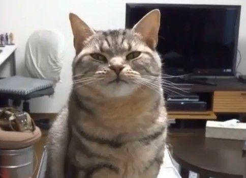 ひたすら欠伸をする猫