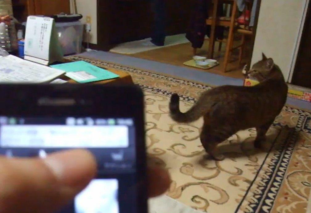 どこかに仲間が!?猫の鳴き声アプリで探し回る猫