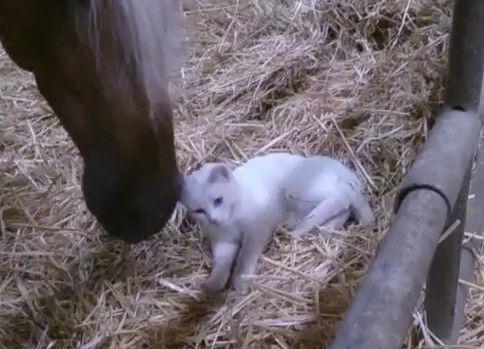 上唇で猫の頭をいいコいいコしてあげる馬