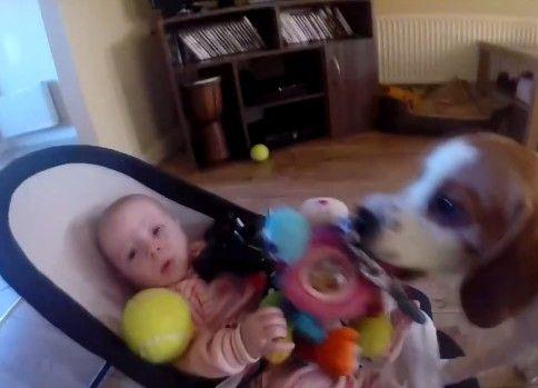 玩具を奪って赤ちゃんを泣かしてしまった犬の行動