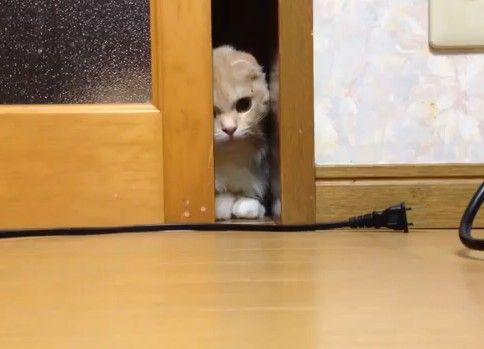 いくら頑張っても窓を開けれない・・・かわいさMAXなネコさん